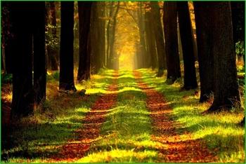 forest-868715_640.jpg
